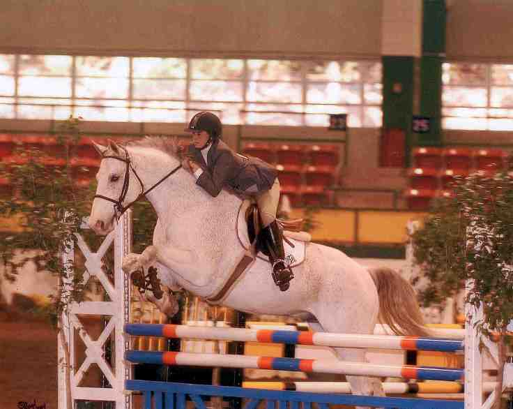 Grand Milton w/Taryn - Hunter/Jumper in Raleigh