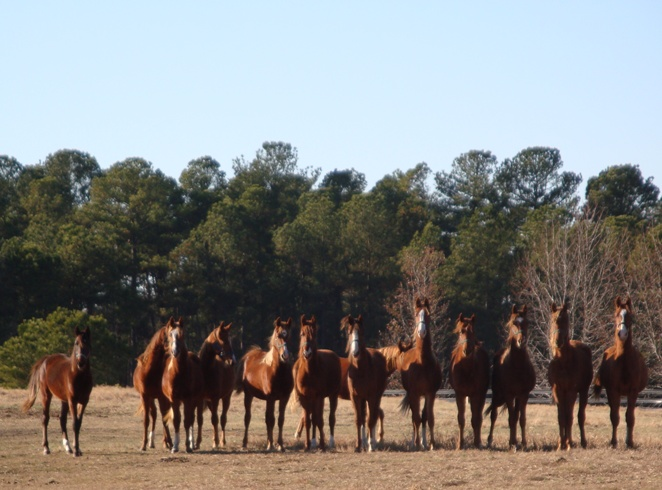 Windsor Farm Yearlings